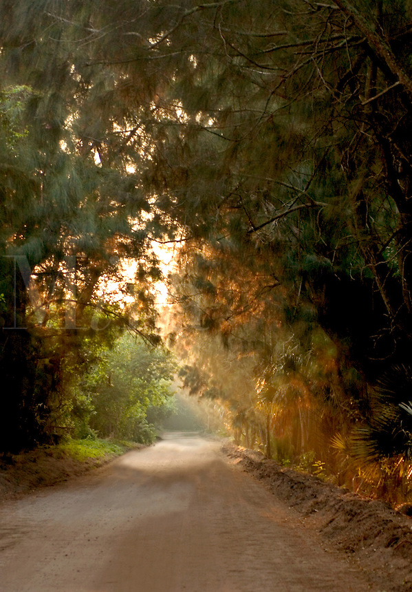 """A road in Florida by Sebastian Inlet called the """"Jungle Trail"""" sits between the Indian River and the Atlantic Ocea"""