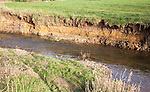 Erosion and deposition with river cliff and slip-off slope, River Deben, Ufford, Suffolk, England