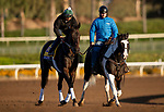 OCT 29: Breeders' Cup Distaff entrant Elate, trained by William I. Mott, at Santa Anita Park in Arcadia, California on Oct 29, 2019. Evers/Eclipse Sportswire/Breeders' Cup
