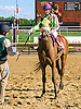 Fine Hesst winning at Delaware Park on 8/22/16<br /> bred by Cre Run Enterprises Dahess - Full of Finesse