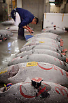 Tokyo, 1st of March 2010 - Tuna at Tsukiji wholesale fish market, biggest fish market in the world. 5 a.m, a middleman scrutinizing frozen tunas before the auction.