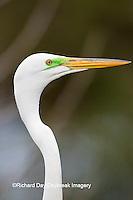 00688-02203 Great Egret (Casmerodius albus) St Augustine, FL