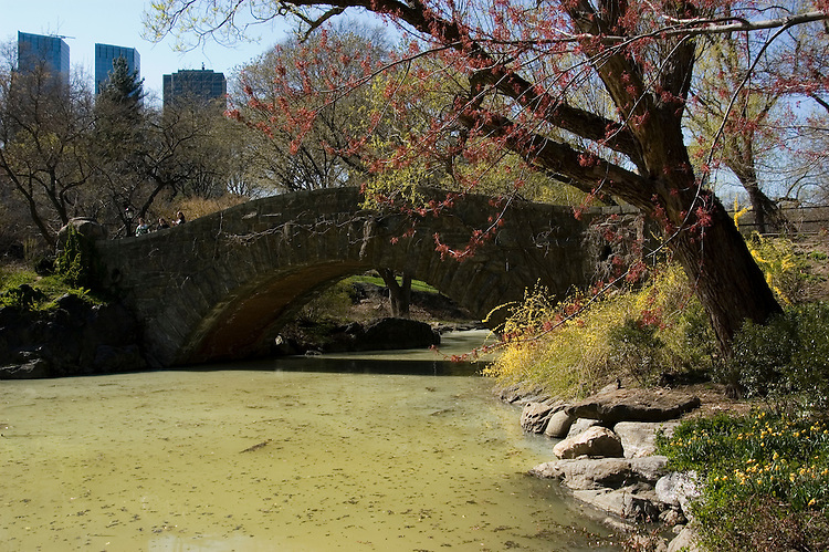 New York City, New York: Spring time with blossoms in Central Park  .Photo #: ny261-14696  .Photo copyright Lee Foster, www.fostertravel.com, lee@fostertravel.com, 510-549-2202.