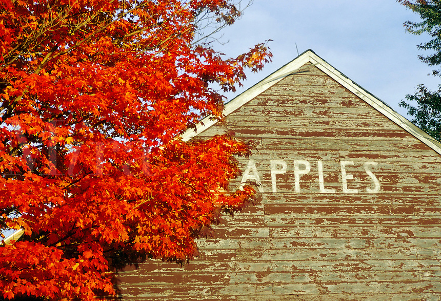 "Northampton, Massachusetts.Brilliant color and ""apples"" say autumn in New England"