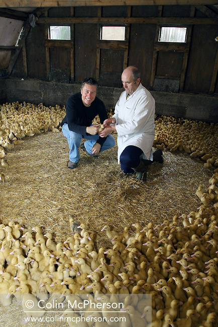 Proprietor Reg Johnson (right) showing chef Paul Heathcote his ducklings housed in a barn at Goosnargh, in Lancashire, northwest England. The plant belongs to Johnson and Swarbrick, a business which rears 2700 ducks and 1200 corn-fed chickens each week. The poultry at the farm is fed with a special corn recipe which Johnson and Swarbrick designed with the help of a nutritionist.