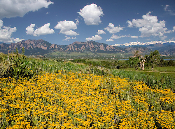 Yarrow wildflowers in Boulder valley, Flatirons rock formation (left) and Rocky Mountains, Boulder, Colorado. .  John leads private photo tours in Boulder and throughout Colorado. Year-round Colorado photo tours.