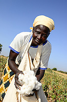 BURKINA FASO, village GOUMSIN near SAPONE, organic and fair trade cotton farming, manual harvest at farm of woman farmer HÉLÈNE KABRE / fair gehandelte Biobaumwolle, Ernte bei Kleinbaeuerin HÉLÈNE KABRE