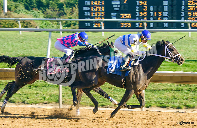 Marrakech winning at Delaware Park on 10/15/16