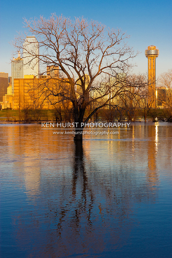 The Dallas, Texas skyline at night and submerged tree reflected in the flooded Trinity River.