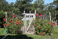 A rustic fence draped in netting and flanked by red hollyhocks protects the vegetables from the animals that roam the garden