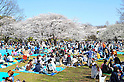 Tokyo, Japan - April 8: People had Hanami parties, or parties under cherry blossoms, in Yoyogi Park, Shibuya, Tokyo, Japan in the fair weather on April 8, 2012.