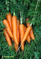 HS12-014c  Carrot - just harvested, Newburg variety