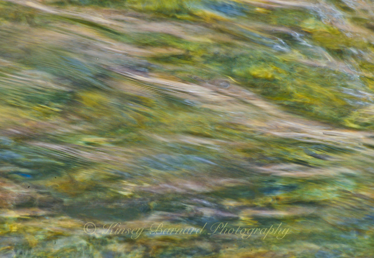 &quot;FROG IN THE RIVER&quot;<br />
