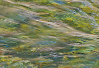 """FROG IN THE RIVER""<br />