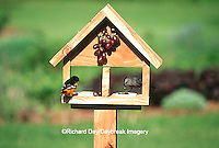 00585-03106 Baltimore Oriole (Icterus galbula) male & Gray Catbird (Dumetella carolinensis) on jelly & grape feeder Marion Co.  IL