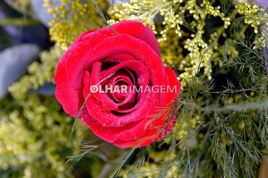 Flor Rosa vermelha. SP. Foto de Manuel Lourenço.