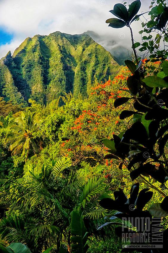 The Ko'olau Mountains and a rain forest, Windward O'ahu.