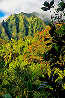 The Ko'olau Mountains and a rain forest, Windward O'ahu.