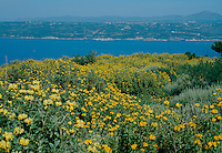 Coast with Phlomis wildflowers in yellow at Aptera, Crete