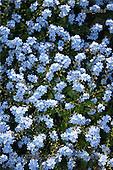 Luiz, FLOWERS, photos, BRLH5089,#f# Blumen, Natur, flores, naturaleza