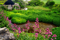 Small stream, rock wall and flowers Red Valerian and iris. Near Lulworth Cove. Dorset. Jurassic Coast, England