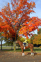Red Down South, horse in training at the Saratoga Oklahoma track, October 2004. Saratoga Race Course, Saratoga Racetrack, beautiful horse racing, Thoroughbred racing, horse, equine, racehorse, morning mood