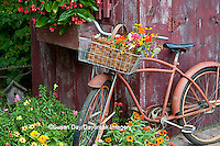 63821-22220 Old bicycle with flower basket next to old outhouse garden shed.   Red Wing Begonias in window box, Zinnias, Snapdragons  (Antirrhinum sp.) below  Marion Co., IL