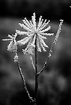 Winter's Star.  From the Palmer Divide Series.