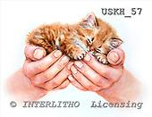 Kayomi, CUTE ANIMALS, paintings, USKH57,#AC# illustrations, pinturas ,everyday