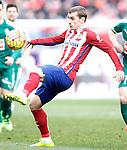 Atletico de Madrid's Antoine Griezmann during La Liga match. February 6,2016. (ALTERPHOTOS/Acero)