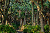 Maritime Forest of Hunting Island