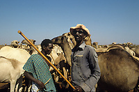 Borana cows at well
