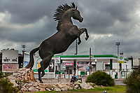 Spain. Balearic Islands. Minorca (Menorca). Ciutadella. A woman rides her scooter on the road and drives by a BP petrol station. A bronze sculpture of a rising Menorquín horse stands in the middle of the roundabout. The Menorquín is a breed of horse indigenous to the island and is closely associated with the doma menorquina style of riding. The most valued quality of Menorquín horse is its suitability for the traditional festivals of Menorca. Horses and riders are usually at the centre of local fiesta celebrations. Riders pass through the crowds, executing caracoles and repeatedly performing the bot. The aim of the 'bot' is for the horse to stand on its hind legs while keeping its head and shoulders relaxed and without tension; the more often it is performed and the greater the distance travelled, the greater the applause of the crowd. The elevade, in which the horse beats the air with the front hooves, is also a part of the ritual of the fiesta. Ciutadella de Menorca or simply Ciutadella is a town and a municipality located in the western end of the island, which is part of the autonomous community of the Balearic. In Spain, an autonomous community is a first-level political and administrative division, created in accordance with the Spanish constitution of 1978, with the aim of guaranteeing limited autonomy of the nationalities and regions that make up Spain. BP plc (formerly The British Petroleum Company plc and BP Amoco plc) is a British multinational oil and gas company. 10.09.2019 © 2019 Didier Ruef