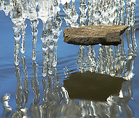 A rock seemingly floats above it's shadow on the waters of the DuPage River.  In reality, the rock is frozen into the icicles on it's hidden edge. The icicles and the suspended rock were the result of the river level being elevated and then dropping quickly over a day or two and the temperature rising.  The icicles were falling all around as I took this image, the rock followed suit shortly after. Morton Arboretum, DuPage County, Illinois