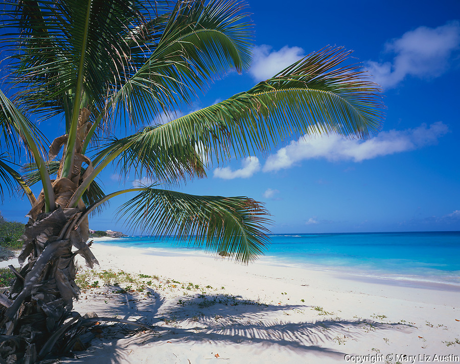 Anguilla, BWI<br /> A coconut palm tree offers shade on the white sand beach of Shoal Bay East on the northeast coast