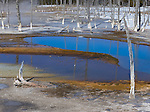 Yellowstone National Park, Wyoming: Opalescent Pool surrounded with dead silicified trees in the Black Sand Basin