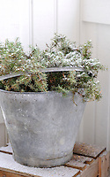 An old tin bucket is transformed into a festive decoration with the addition of some spruce branches covered in snow