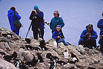 Rockhopper penguins and eco-torurists. New Island.  Falklands