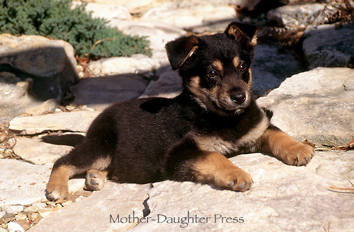 Cute German Shepard mixed breed puppy sitting patiently on rock pathway in garden