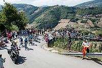 Team Movistar leading the peloton over the first climb of the day<br /> <br /> Stage 15: Tineo to Santuario del Acebo (154km)<br /> La Vuelta 2019<br /> <br /> ©kramon