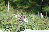 The IRC urban garden for the Roots Program for affordable foods. Photo/Andrew Shurtleff