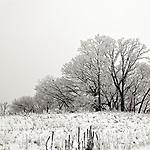 #winter #snow #wisconsin #midwestmemoir #blackandwhite #monochrome #photograph