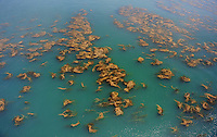 July. 10, 2009; Los Angeles, CA, USA; Ocean beach sea weed algae Santa Monica. Mandatory Credit: Mark J. Rebilas