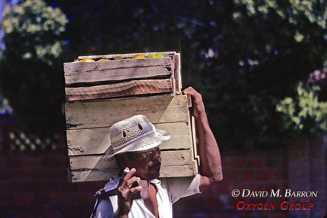Man Carrying Mangos