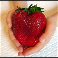 Perfect for Wimbledon - Giant Strawberries.