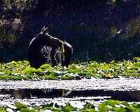 Moose in pond in Grand Teton National Park