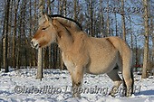 Bob, ANIMALS, REALISTISCHE TIERE, ANIMALES REALISTICOS, horses, photos+++++,GBLA4384,#a#, EVERYDAY