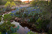A gentle stream flows along Spring Bluebonnets at a pink granite creek bed at Lake Buchanan