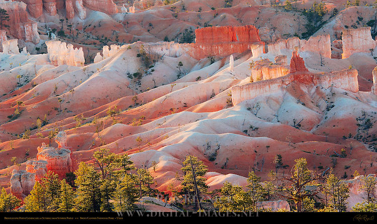 Bristlecone Point Landscape at Sunrise from Sunrise Point, Bryce Canyon National Park, Utah
