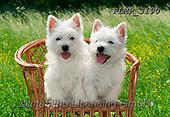 Marek, ANIMALS, REALISTISCHE TIERE, ANIMALES REALISTICOS, dogs, photos+++++,PLMP3190,#a#, EVERYDAY